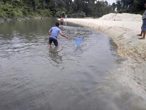 Sungai Bawang di Kuansing Dibanjiri Limbah, Banyak Ikan yang Mati
