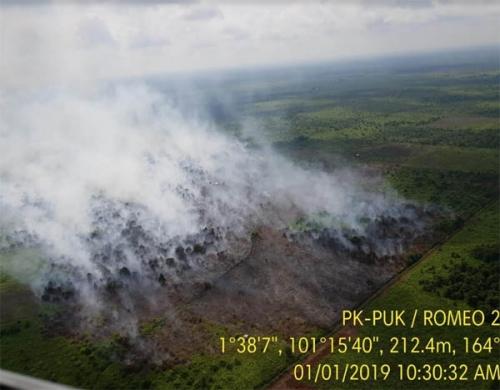 Awal 2019, Riau Disambut Kebakaran Lahan Seluas 15 Hektare di Tanah Putih Rohil
