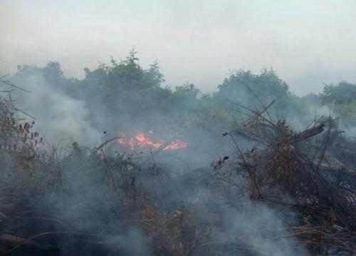 4 Hotspot Terpantau Pagi Ini di Riau, BMKG: Waspada Angin Kencang