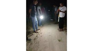Jejak Harimau Sumatera Ditemukan Dekat Pemukiman Warga di Jalan Guru Desa Karya Indah