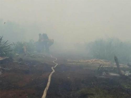 Hirup Asap Kebakaran Lahan di Perbatasan Rohil - Dumai, Dua Warga Pingsan
