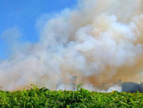2020 Riau Tanpa Kabut Asap, Ini Himbauan Gubernur Riau Syamsuar