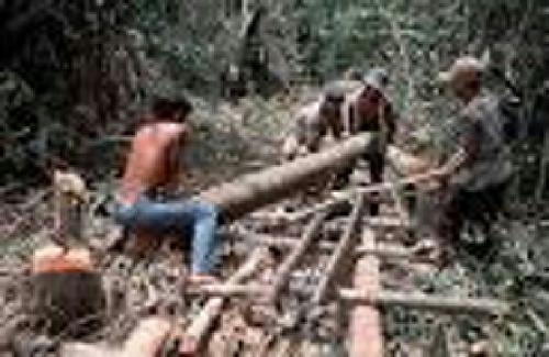 Diduga Terlibat Ilegal Logging, Kejari Rengat Dalami Kasus Kades Pring Jaya