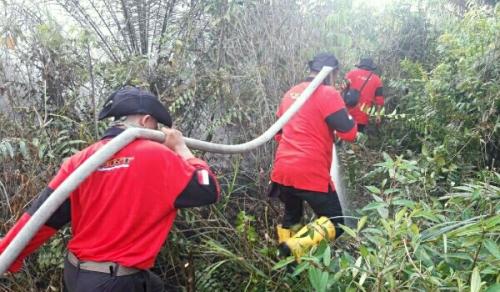 Kebakaran Lahan di Pangkalan Kerinci Merembet ke Kebun Sawit Masyarakat