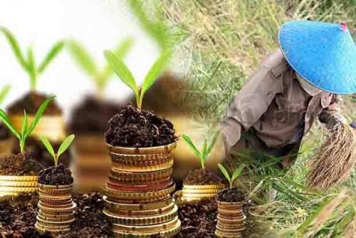 NTP Naik 2,04 Persen, BPS Sebut Petani di Riau Secara Umum Masih Defisit