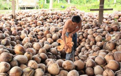 Harga Kelapa Anjlok, Inflasi Tembilahan Urutan ke-3 di Sumatera dan Tertinggi se-Riau