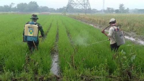 NTP November Naik 2,34 Persen, Daya Beli Petani di Perdesaan Riau Diklaim Meningkat