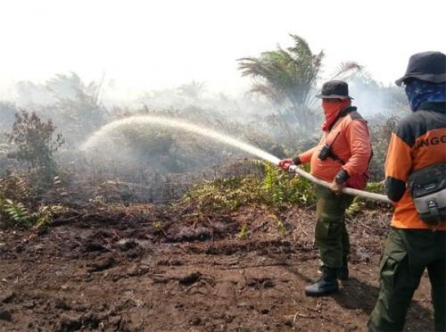 25 Hektar Kebun Nenas Terbakar di Rokan Hilir, Diduga dari Api Puntung Rokok