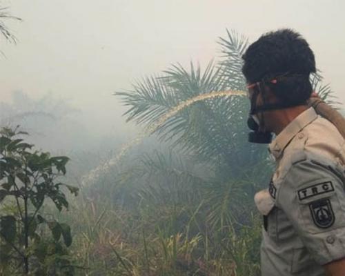 Awal Tahun 2019, Kebakaran Hutan di Riau Capai 20 Hektare
