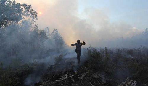 Cegah Karhutla di Riau, BNPB Terjunkan 1.205 Personel TNI dan Polri