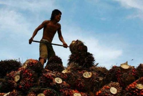 Alhamdulillah, Daya Beli Petani Perkebunan Rakyat Riau Mulai Naik