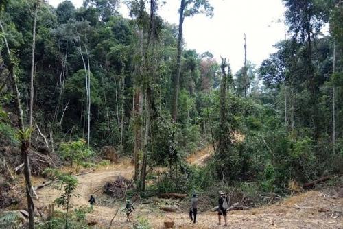 Perusahaan Swasta Rambah Hutan Lindung Bukit Betabuh 3.000 Hektare, KLHK Turunkan Tim Penyelidikan