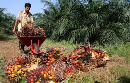 Kata Menteri Perdagangan, Eropa Kesulitan Bila Indonesia Hentikan Ekspor Sawit