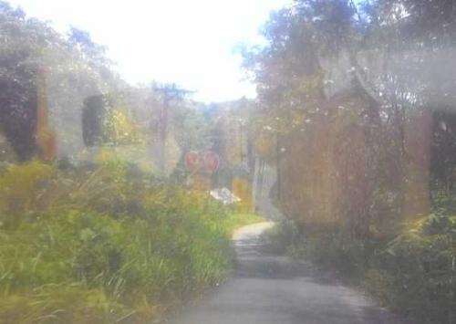 Jalan Penghubung Antar Desa di Kampar Ini Ditutupi Semak Belukar