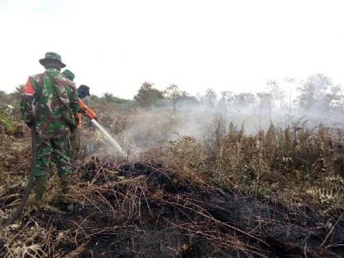 Polisi Selidiki Penyebab Kebakaran di Rohil dan Dumai, Nama Pemilik Lahan Sudah Dikantongi