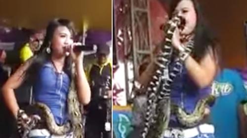 Tragis... Penyanyi Dangdut Irma Bule Tewas Dipatuk King Kobra saat Aksi Tari Ular di Panggung