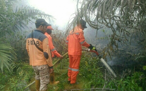 Tim Ditarik dari Lokasi, BPBD Pelalawan Pastikan Karhutla di Tanjung Putus Sudah Padam