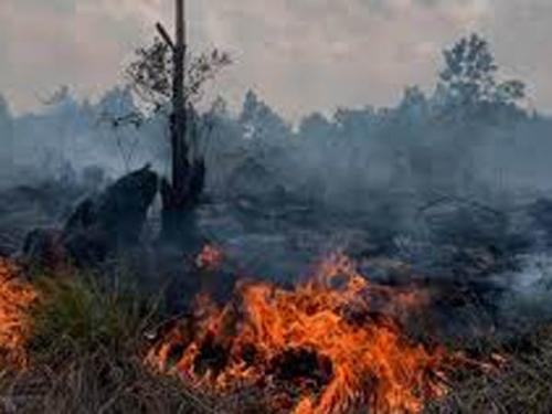 16 Petani di Riau Jadi Tersangka Pembakar Lahan, Belum Ada Korporasi