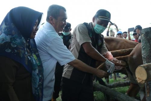Kontes Sapi yang Diikuti 48 Peserta, Bentuk Keberhasilan Bidang Peternakan di Wilayah Kabupaten Siak