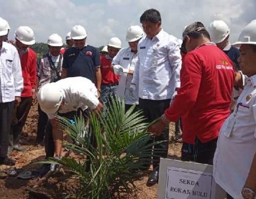 Jadi Pilot Project, Sekdakab Rohul Tanam Perdana Sawit Rakyat Program Nasional