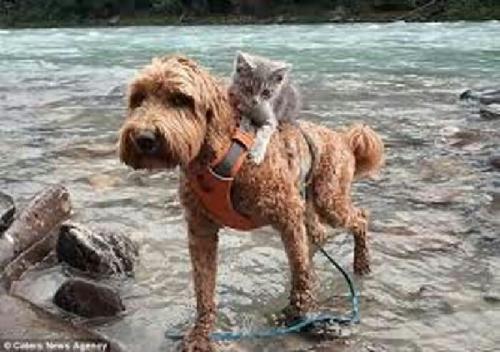 Lucu dan Menggemaskan, Anjing Gendong Kucing Seberangi Sungai Saat Bertualang Bersama, Lihatlah Fotonya