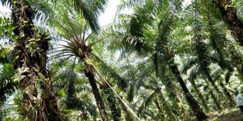Satgas Penertiban Perkebunan Ilegal Bergerak ke Kampar dan Rohul, Wagubri: Kalau Terbukti Melanggar Langsung Diserahkan ke Penegak Hukum