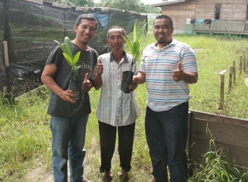 Melalui Program Pinang Masuk Desa, DPD Partai NasDem Kepulauan Meranti Distribusikan 50 Ribu Bibit Pinang Batara ke Petani