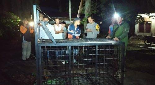 Pasang Kandang Jebakan, Tim BBKSDA Riau Masih Upayakan Penangkapan Satwa Beruang Madu di Koto Gasib