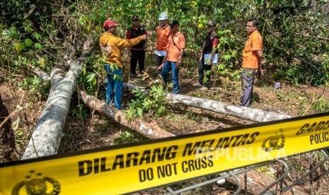 Pohon Sengon Jadi Tersangka Padamnya Listrik di Jabodetabek