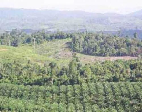 KLHK Panggil Bos PT MAL Terkait Pengrusakan Hutan Lindung di Inhu