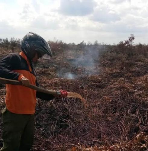 Manggala Agni Masih Berjuang Padamkan Api di Mamugo