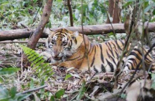Karhutla di Riau Ancam Populasi dan Habitat Satwa yang Dilindungi