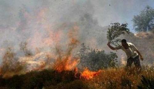 Buka Kebun Sawit dengan Cara Membakar, Tiga Pria Ditangkap Polisi di Inhu