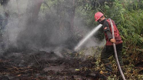 Untuk Warga Riau, Jika Ada Kebakaran Hutan dan Lahan, Segera Hubungi Nomor Ini..