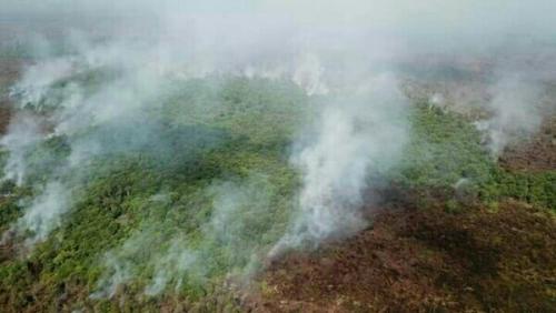 Karhutla Pelalawan, BPBD: Sudah Dua Perusahaan Lahannya Terbakar