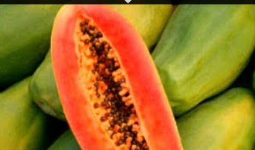 Ingin Terhindar Kanker Payudara dan Pankreas, Rajinlah Konsumsi Pepaya