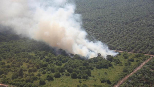 Luas Lahan Terbakar di Riau Capai 6.425 Hektare