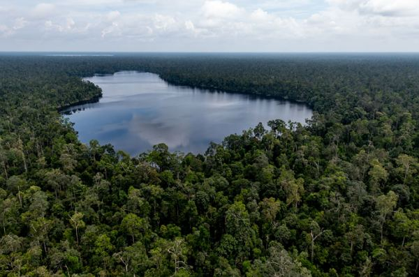 RER Catat Kemajuan Dalam Memperbaiki Hutan Rawa Gambut Utuh Terbesar di Sumatera