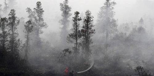Menteri LHK Keluarkan Peringatan: Bersiaplah Hadapi Ancaman Kebakaran Hutan Besar!