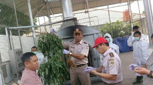 Gawat, 4 WN China Tanam 5.000 Batang Cabai Berbakteri di Bogor, Diduga Bertujuan Punahkan Cabai Indonesia, Berpotensi Rugikan Petani Rp54 Triliun