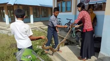 Ular Piton Masuk Pekarangan SMPN 5 Tobadak, Guru Cantik Ini Menangkapnya Pakai Tangan Kosong