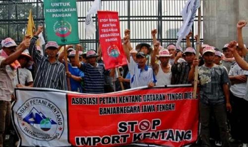 Masuk Secara Ilegal, Kentang China Banjiri Pasar, Petani Indonesia Dirugikan Rp160 Miliar dalam 6 Bulan