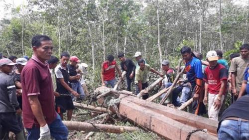 Maelo Kayu Jalur, Tradisi yang Terus Dipertahankan Masyarakat Kuansing