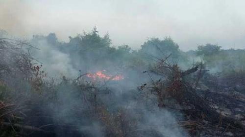 Minggu Kedua 2019, Sudah 108 Hektar Lahan Terbakar di Riau, Polisi Belum Tetapkan Tersangka