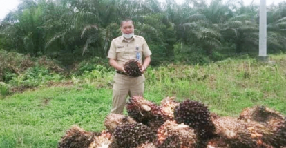 Jelang Lebaran, Harga TBS Kelapa Sawit di Riau Naik Lagi Jadi Rp2.563,75 per Kg