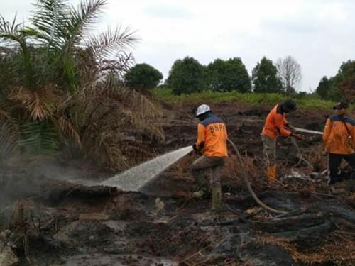 Sudah Dua Minggu, Kebakaran Lahan Gambut di Penyaguan Inhu tak Berhasil Dipadamkan