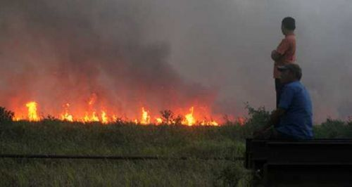 Perusahaan Dipanggil Tak Buka Lahan dengan Membakar