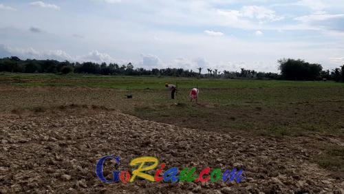 Kekeringan, Petani di Pangean Berharap Dibuatkan Sumur Artesis