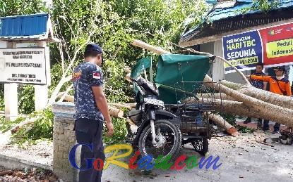 Puskesmas Selatpanjang Rusak Tertimpa Pohon Pelindung Jalan, Dipastikan Tak Ada Korban Jiwa
