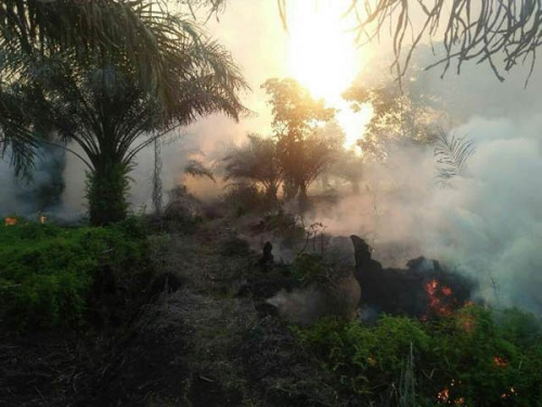 Kebakaran Lahan Mulai Terjadi di Pelalawan
